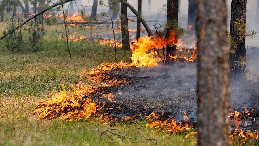 Ответственность за содержание средств предупреждения и тушения лесных пожаров в период пожароопасного сезона