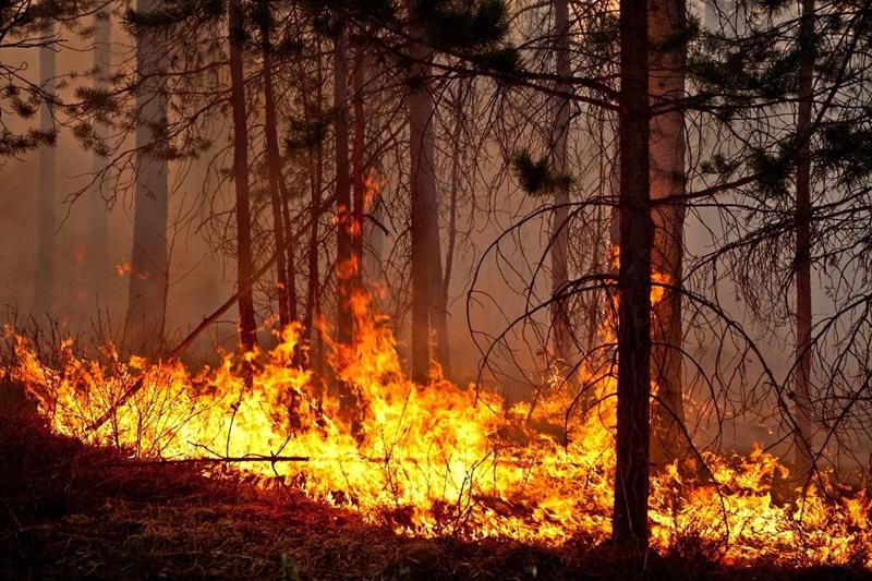 В районе уже зарегистрировано два лесных пожара