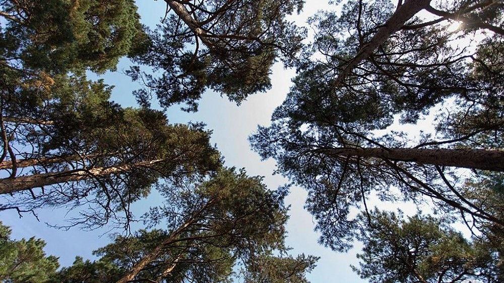 Более тысячи южноуральцев выявлено в лесах и на озерах в период самоизоляции