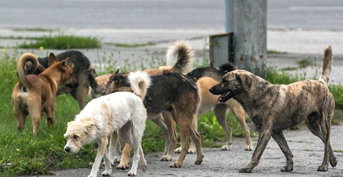 Бродячие собаки создают угрозу для населения