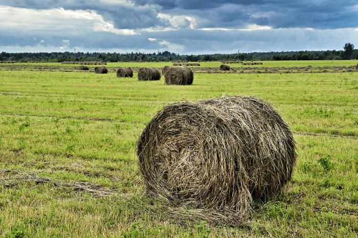 Хозяйства района заготавливают сено